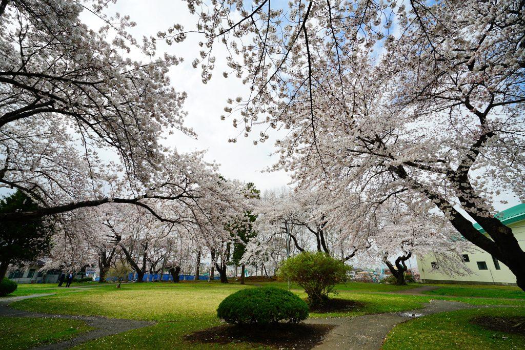 令和3年 春まつり・桜まつり開催情報